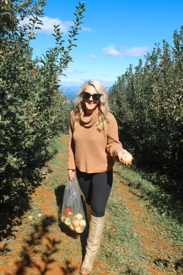 5 Quick Tips for Apple Picking at Carter Mountain Orchard