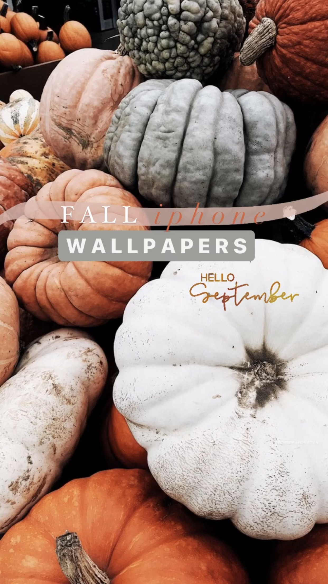 21 Aesthetic Fall Iphone Wallpapers You Need For Spooky Season Chasing Chelsea